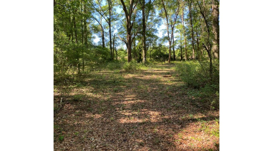 L-127 WEST SOUTH DRIVE, Mayo, 32066, ,Residential Lot,For Sale,WEST SOUTH DRIVE,8012